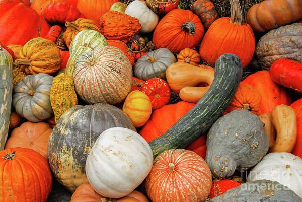 Photograph - Pumpkin Patch by Paul Quinn