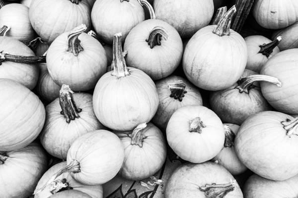 Photograph - Pumpkin Pile by SR Green
