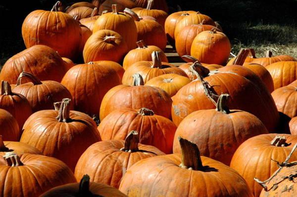 Photograph - Pumpkin Stack by Teresa Blanton