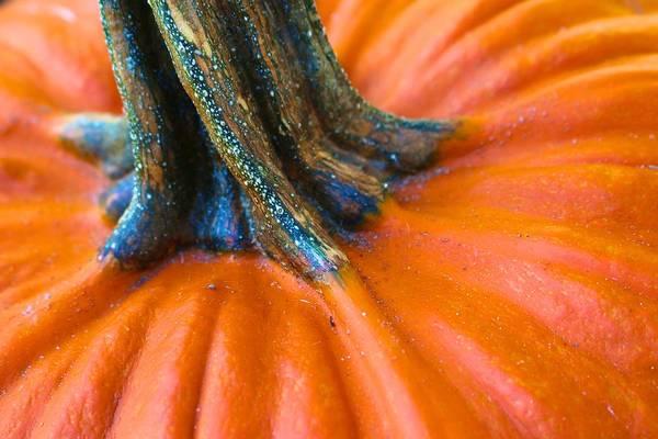 Photograph - Pumpkin Stem by Polly Castor