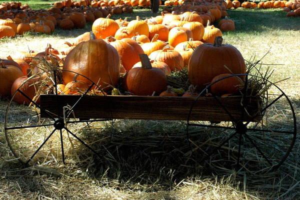 Photograph - Pumpkin Wagon 3 by Teresa Blanton
