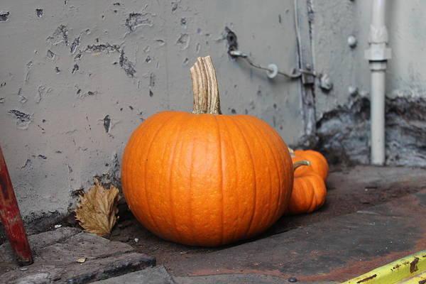 Mount Clemens Photograph - Pumpkins by Anita Hiltz