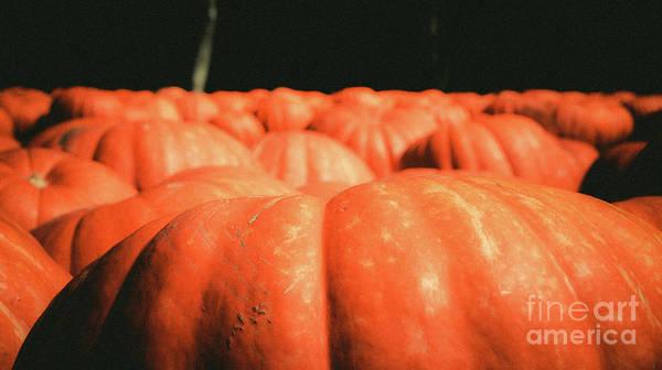 Photograph - Pumpkins 15 by Andrea Anderegg