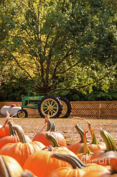 Photograph - Pumpkins 17 by Andrea Anderegg