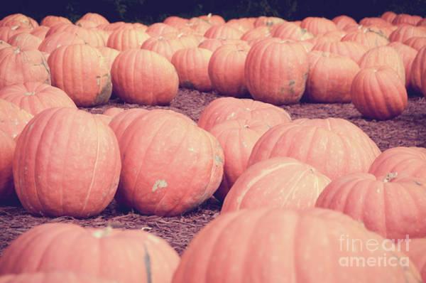 Photograph - Pumpkins 20 by Andrea Anderegg