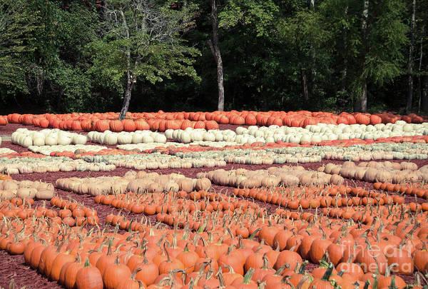 Photograph - Pumpkins 23 by Andrea Anderegg