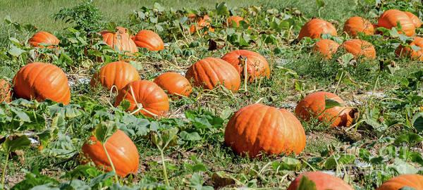Photograph - Pumpkins 26 by Andrea Anderegg