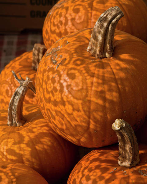 Wall Art - Photograph - Pumpkins And Lace Shadows by Bruce Frye