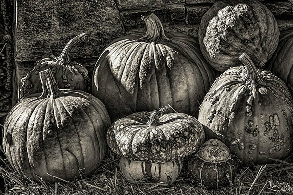 Acorn Squash Photograph - Pumpkins And Squash In Black And White Hdr by Sherman Perry
