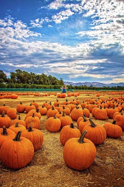 Photograph - Pumpkins At The Patch by Lynn Bauer