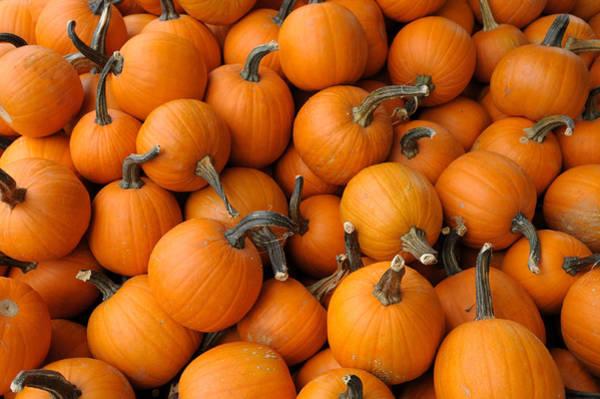 Photograph - Pumpkins by Bradford Martin