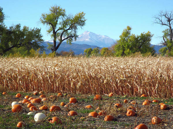 Photograph - Pumpkins Corn And Longs Peak by Marilyn Hunt