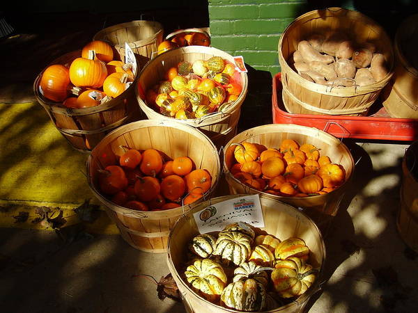 Photograph - Pumpkins by Flavia Westerwelle