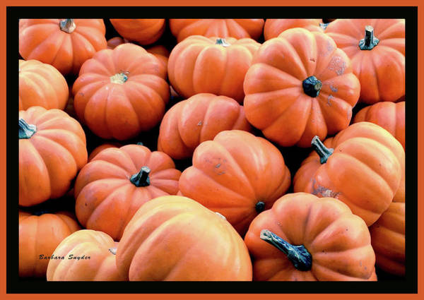Photograph - Pumpkins From Ventura California by Barbara Snyder