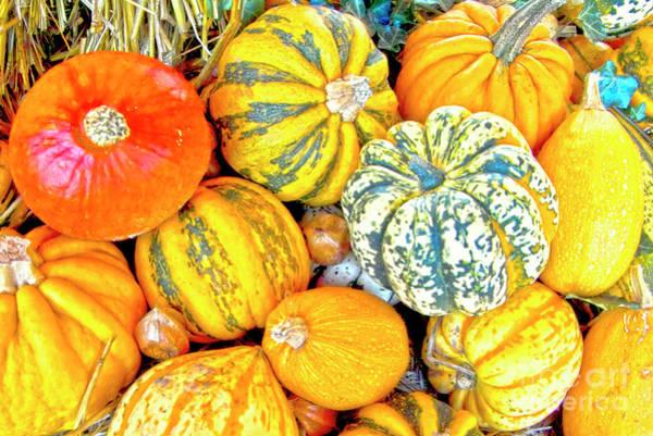 Cucurbit Photograph - Pumpkins by Heiko Koehrer-Wagner