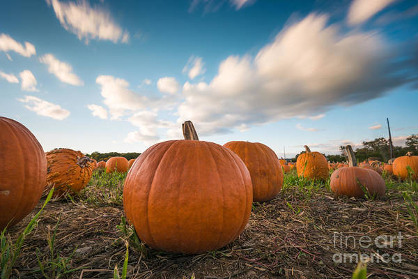 Photograph - Pumpkins In Motion by Alissa Beth Photography
