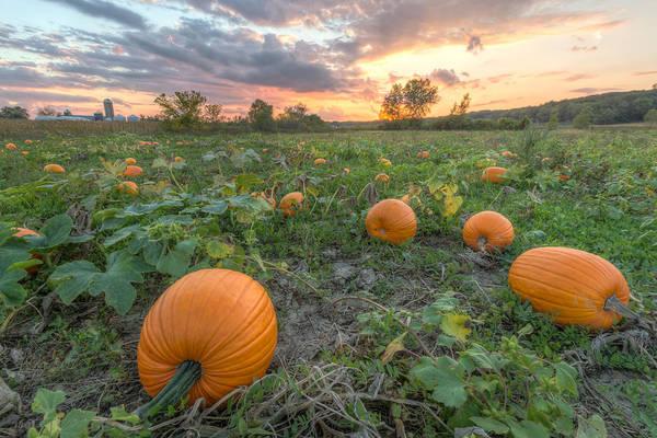 Photograph - Pumpkins by Paul Schultz