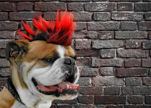 Hairstyle Photograph - Punk Bully by Christine Till