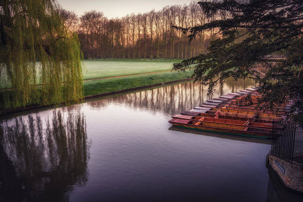 Photograph - Punts On The Cam by James Billings