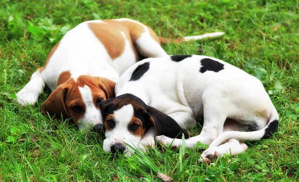 Photograph - Puppies by Jill Lang