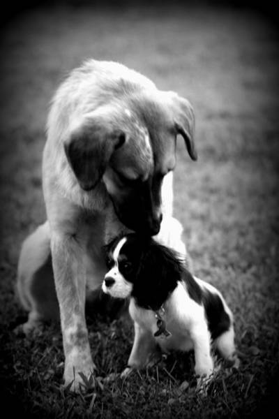 Photograph - Puppies by Susie Weaver