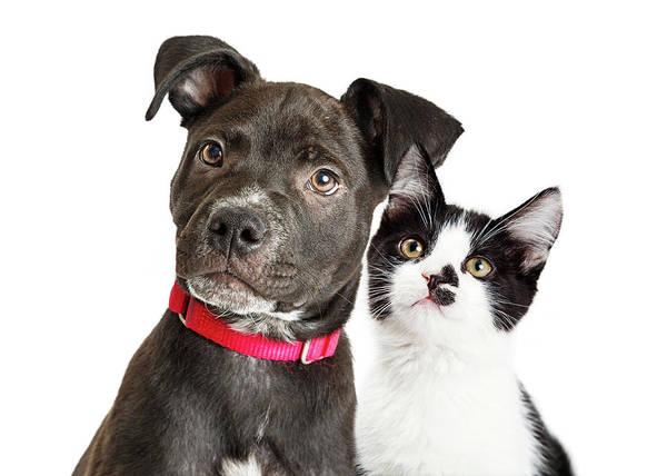 Wall Art - Photograph - Puppy And Kitten Closeup Over White by Susan Schmitz