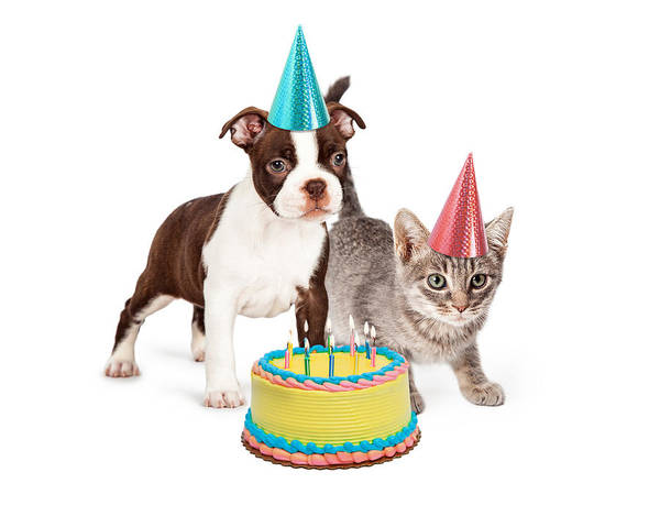 Puppies Photograph - Puppy And Kitten With Birthday Cake by Susan Schmitz