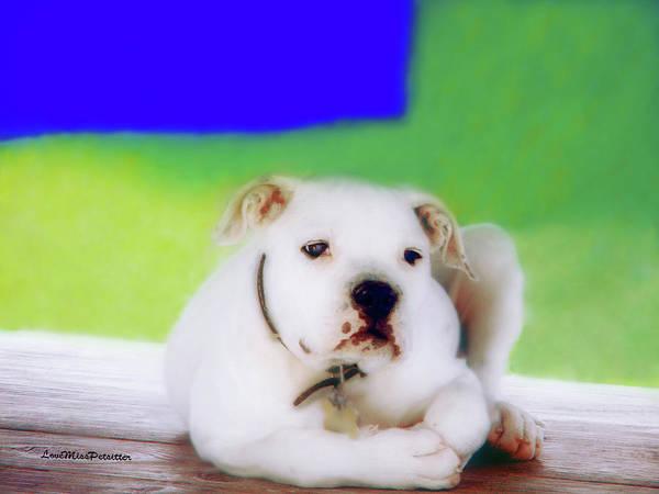 Puppy Art 2 Art Print