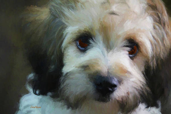 Photograph - Puppy Face by Ericamaxine Price