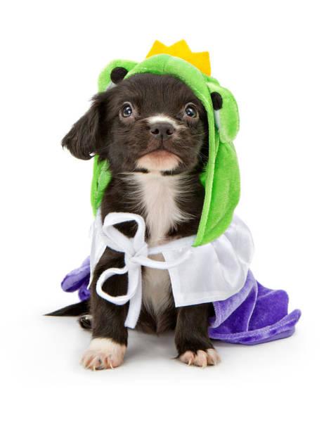 Puppies Photograph - Puppy Frog Prince by Susan Schmitz