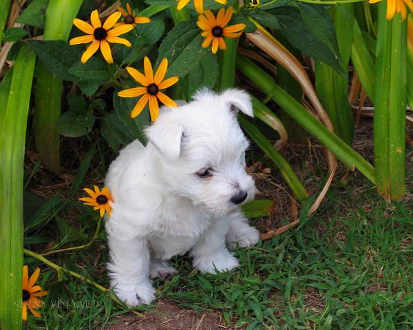 Photograph - Puppy In The Garden by Susan Vineyard