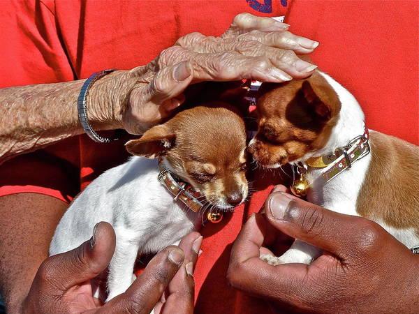 Photograph - Puppy Love by Diana Hatcher