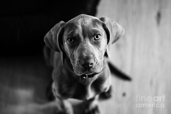 Puppy - Monochrome 1 Art Print