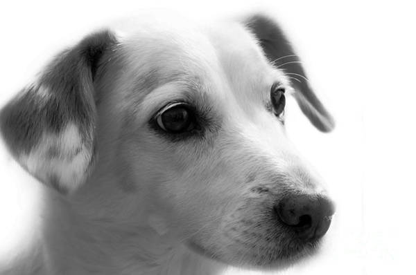 Puppy - Monochrome 4 Art Print