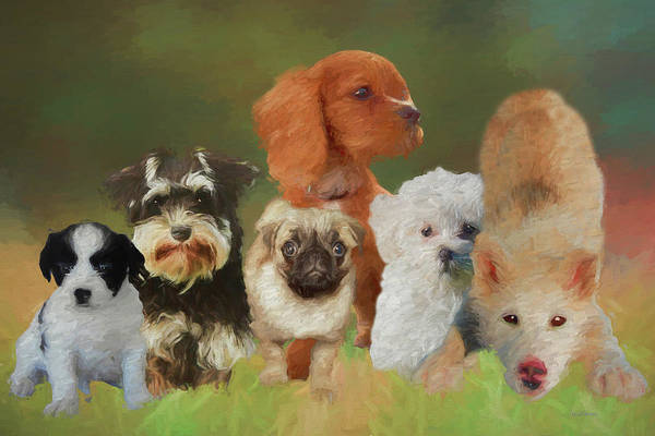 Photograph - Puppy Party by Ericamaxine Price