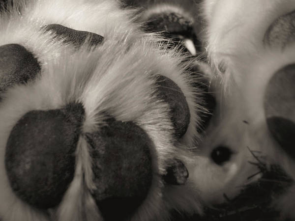 Photograph - Puppy Paws by JAMART Photography