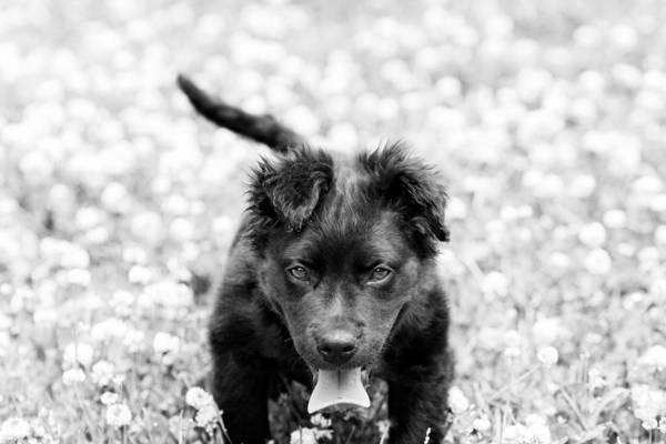 Puppy Play Art Print