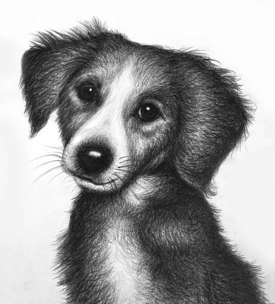Wall Art - Drawing - Puppy by Robert Korhonen