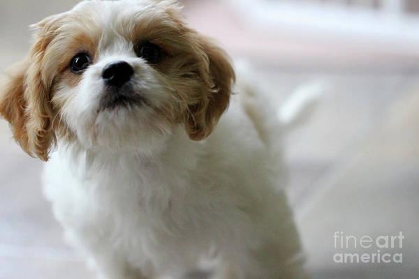 Photograph - Puppy Sunshine by Karen Adams