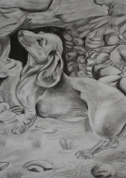 Wall Art - Drawing - Puppy  by Cristina Sofineti