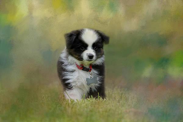 Photograph - Puppyhood 1 by Jai Johnson