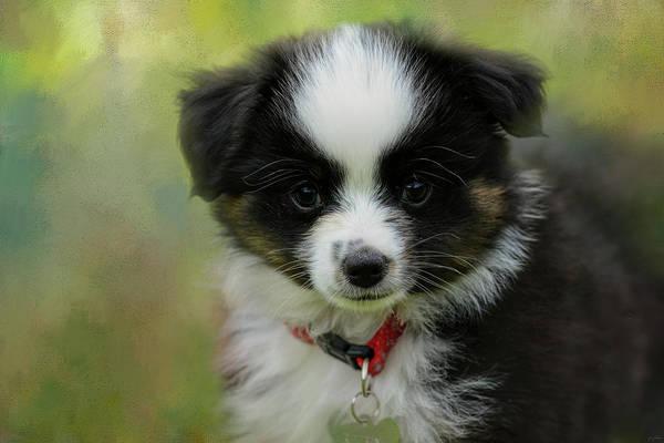 Photograph - Puppyhood 3  by Jai Johnson