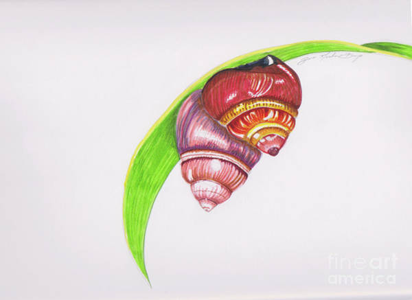Oahu Drawing - Pupu Kani Oe by D Noelani Bangs