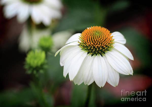 Photograph - Pure Beauty by Karen Adams