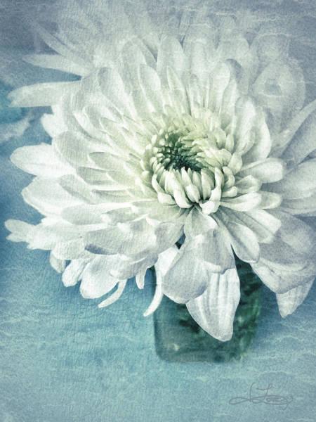 Photograph - Chrysanthemum Joy by Jill Love