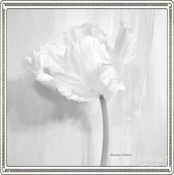 Wall Art - Photograph - Pure Parrot Tulip by Marsha Heiken