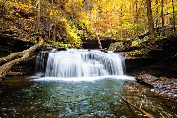 Cloudland Canyon Photograph - Pure Silk In The Forest by Debra and Dave Vanderlaan