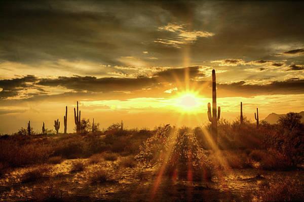Silhoutte Photograph - Pure Sonoran Gold  by Saija Lehtonen