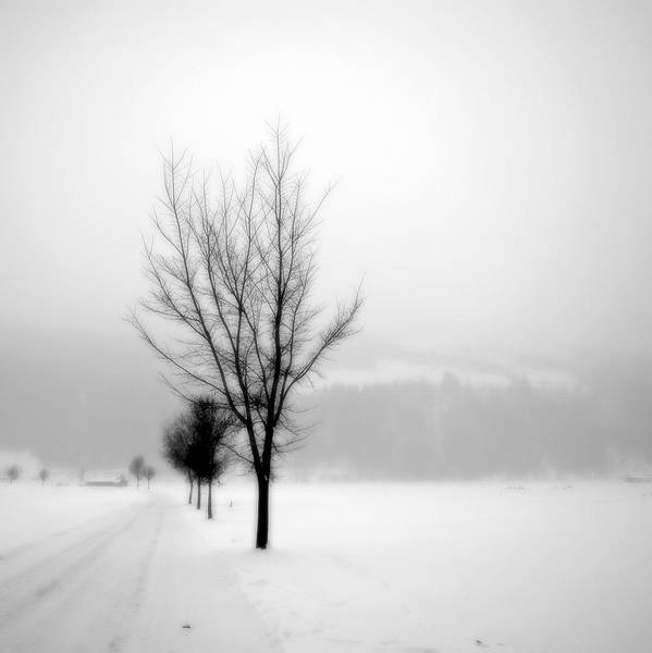 Photograph - Pure White II by Anita Kovacevic