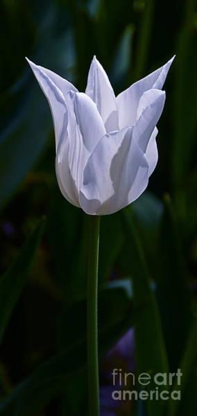 Photograph - Pure White Petals by Byron Varvarigos